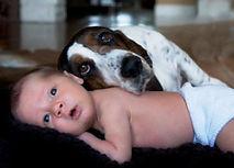 Baytown Humane Society
