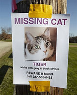 When Kitty Disappears
