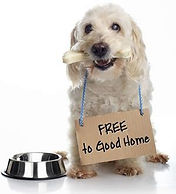 """Tragedy of """"Free To A Good Home"""" Pets"""