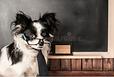 Dog as Teacher.png