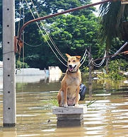Pets and Disaster: Be Prepared