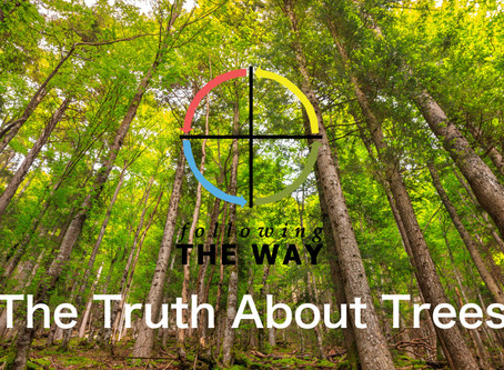 The Truth About Trees