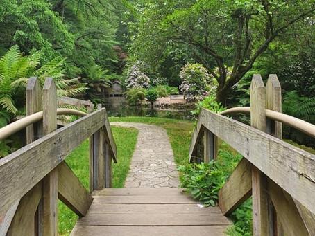 Build a bridge to tomorrow with meditation