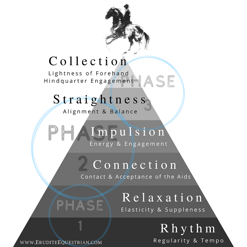 Dressage training scale pyramid