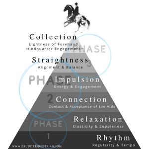 Dressage training scale pyramid