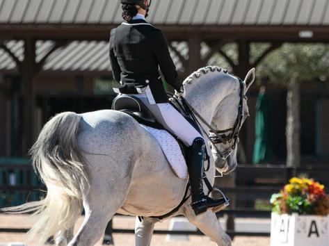 Erudite Equestrian Horse Blog