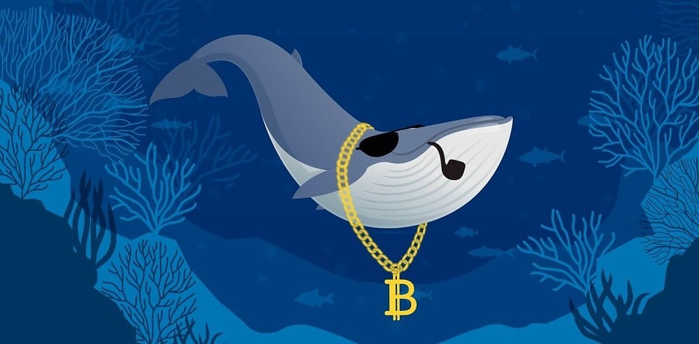 Whales resume bitcoin accumulation