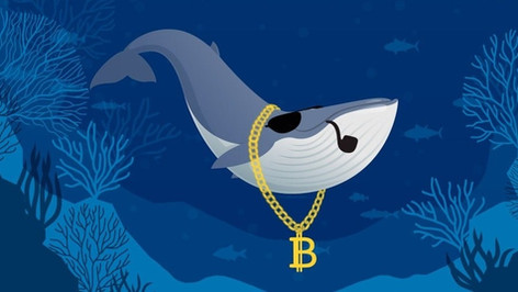 """Whales and """"small fish"""" resume bitcoin accumulation"""