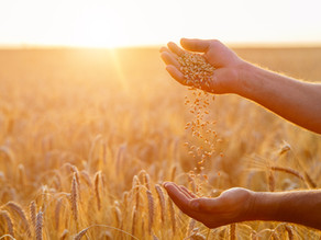 Separate the wheat from the chaff