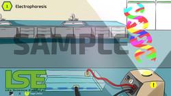 1Electrophoresis-download6shop