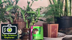 plantcelliOS5