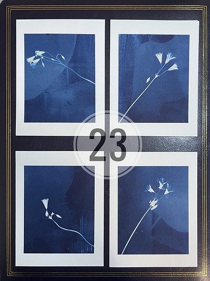 card set 23