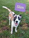 Slim.jpg