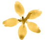 yellow flower.png