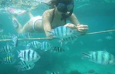 Bali Snorkeling  Water Sports activity