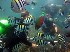 Diving for beginners in Bali