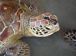 Turtle Island Bali
