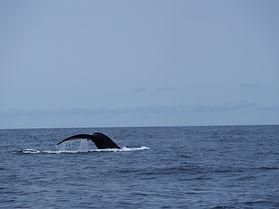 Maine Humpack Whale Watch B.JPG