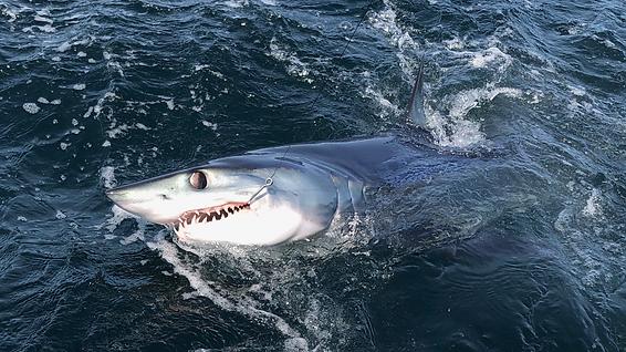 Mako Shark, Griffin Sherry, Ghostland