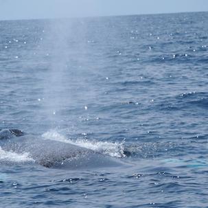 Maine Whale Watch A.JPG
