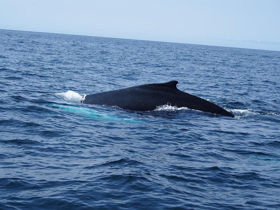 Maine Whale Watch D.JPG