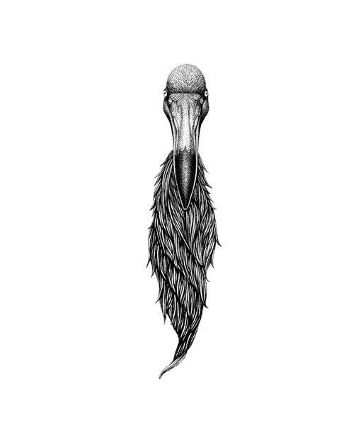 ptak fous