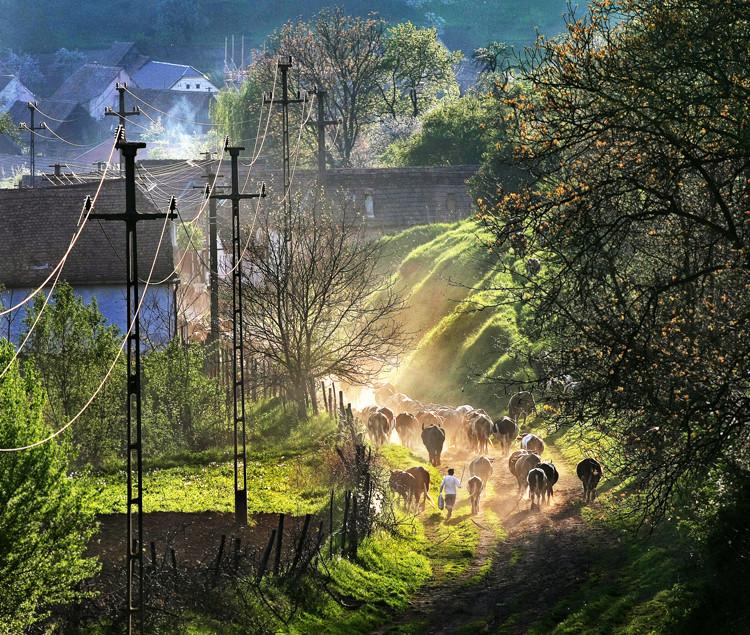 Simte viata satului / Feel the village life