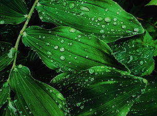 close-up-dew-drops-of-water-2473990 (1).