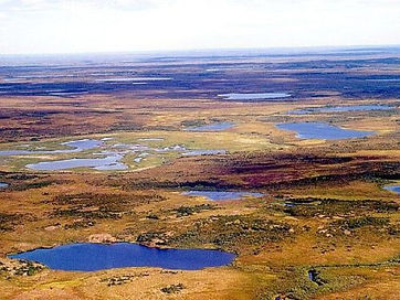 The Siberian Tundra in summer