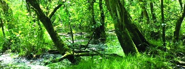 Wet woodland.png
