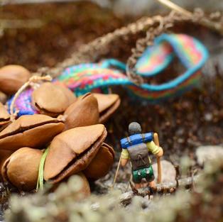 Seed Pod Rattle Hiker