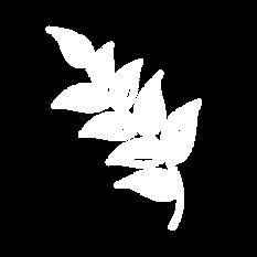 leaf backwards.png