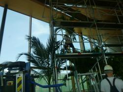 Montage steiger om palmbomen