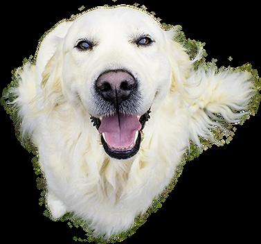 smiling-dog-png-4.png