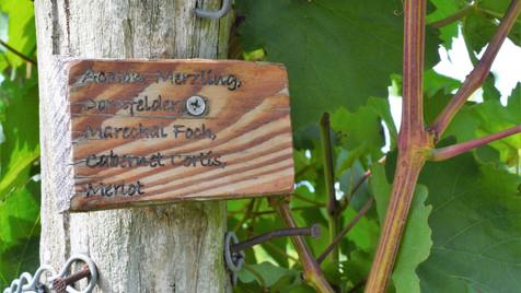 Born To Taste Wine Making Process.JPG