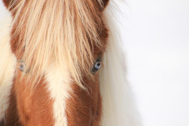 """""""Blue Eyed Horse"""" Iceland. 2018"""