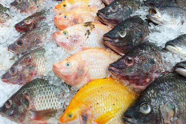 fresh-fish-ice-shelf_51524-3364.jpg