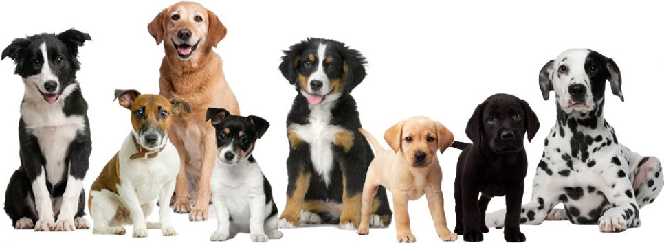 happy-dogs.jpg