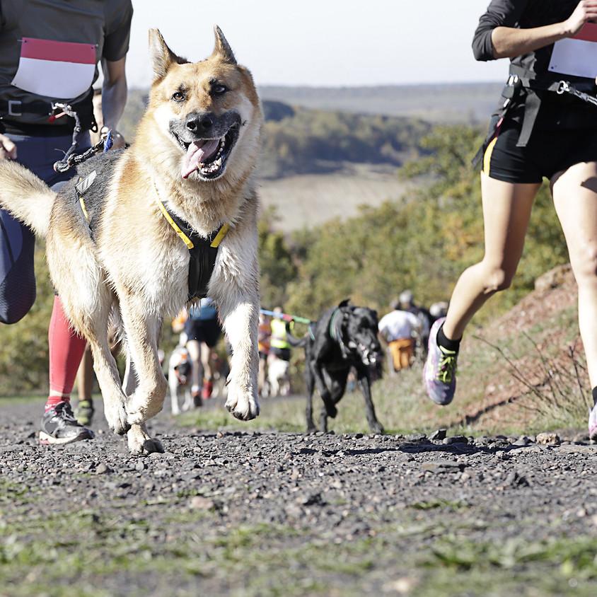 Maze Runner Race - Canicross