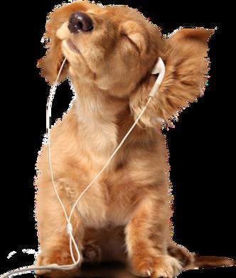 musical-dog.png