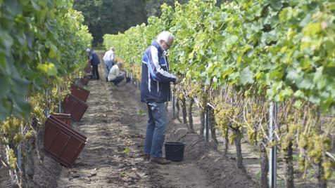 Born To Taste Wine Making Process