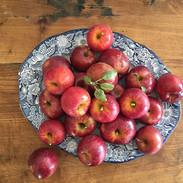 Escrimis fruit
