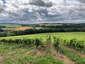 vines near Grazimis