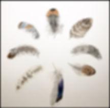 Feathers (watercols).jpg