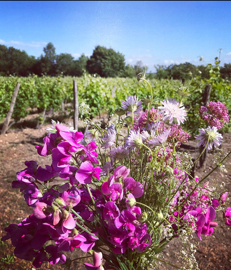 Across the vineyard at Escrimis