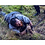 Thumbnail: Into The Badlands (TV) Bajie (Nick Frost) Rat (Rubber prop) (0017)