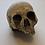 Thumbnail: Cursed (TV) (2020) Temple of Calliech Skull (0528)