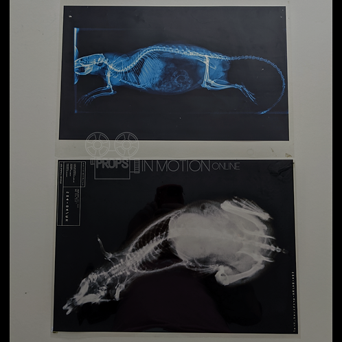 Fortitude (2015-2018) Lab Rat X-rays