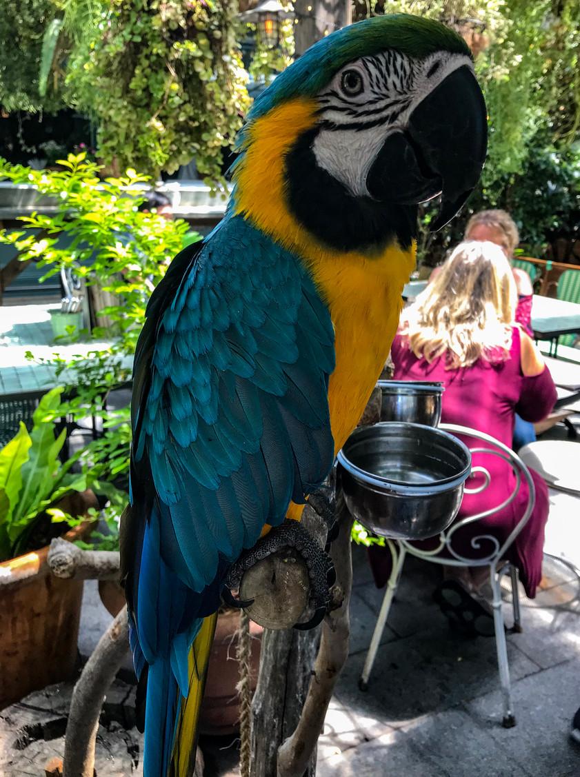 The lovely parrot @ Alexandria