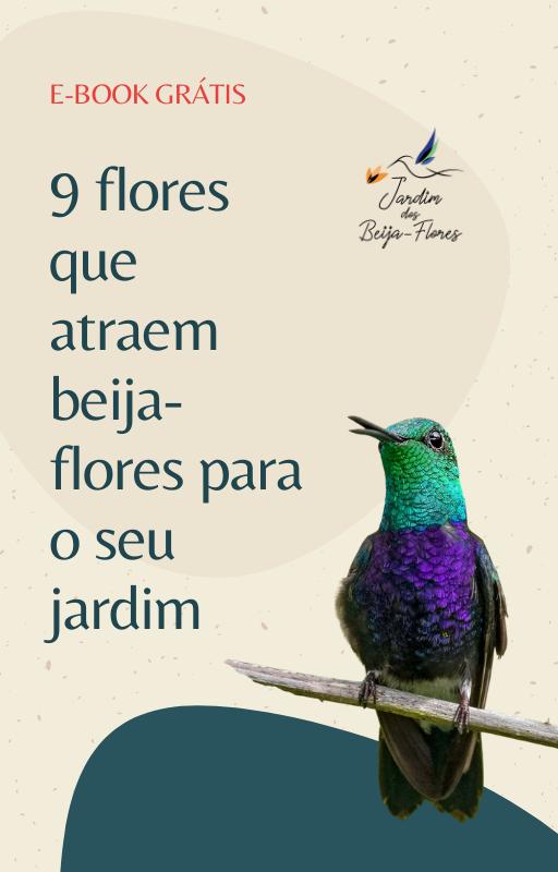 9 Flores que atraem Beija-Flores para o seu Jardim
